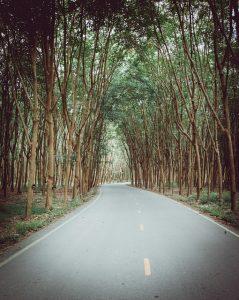 林道、極める