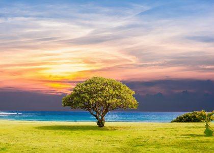 一本木、風景