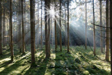 森林、木漏れ日