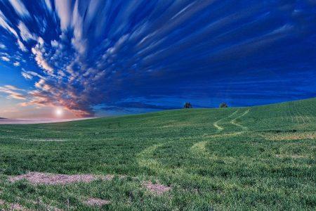 風景、草原、空