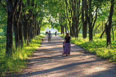 木々、新緑、散歩