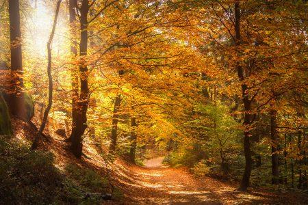 秋、紅葉、木漏れ日