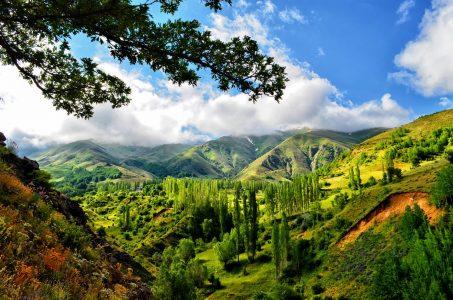 森林、山脈、自然、風景