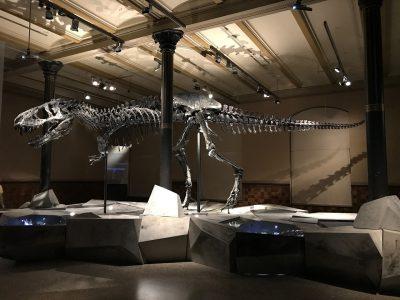 恐竜、博物館、骨