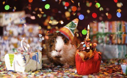 誕生日、パーティー
