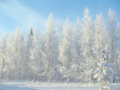 冬、雪、林