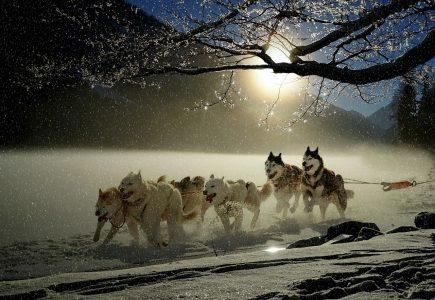 犬、ソリ、雪、冬